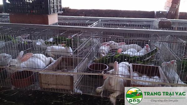 mô hình nuôi thỏ sạch